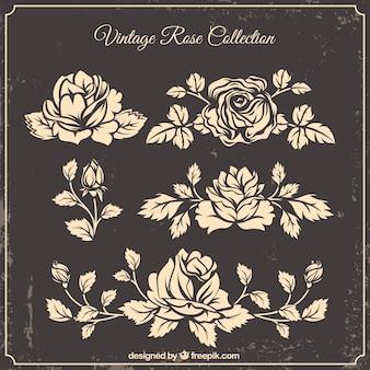 Collezione di rose disegnate a mano in stile vintage