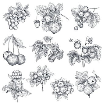 Collection of hand drawn sketched berries isolated