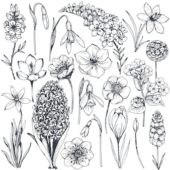 Collection of hand drawn spring flowers and plants. monochrome
