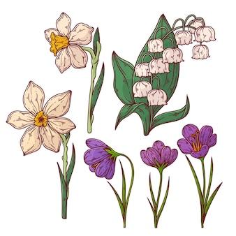 Raccolta di fiori primaverili disegnati a mano