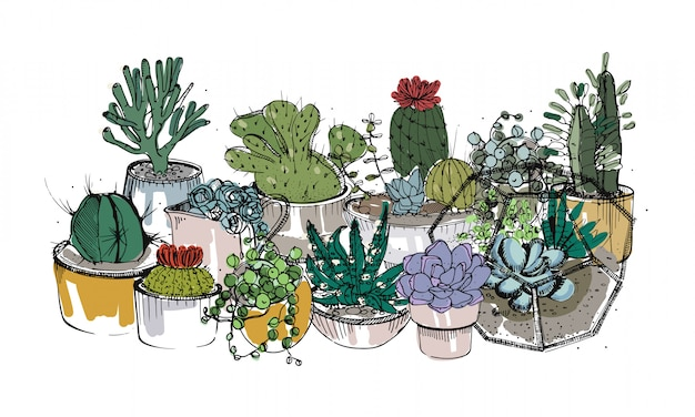 Collection of hand drawn succulents, cactuses and other desert plants growing in pots and glass vivariums.