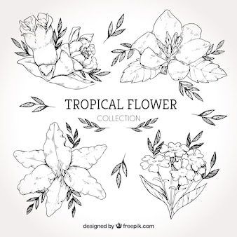 Collection of hand drawn tropical flowers