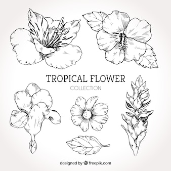 Raccolta di fiori tropicali disegnati a mano