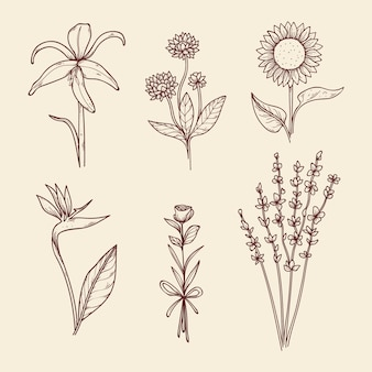 Collection of hand-drawn vintage botany flowers