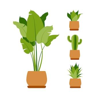 수집 집 식물. 화분에 심은 식물 흰색 절연입니다. 녹색 열대 식물을 설정하십시오. 실내 식물, 화분, 선인장, 열대 잎으로 트렌디 한 가정 장식. 플랫.