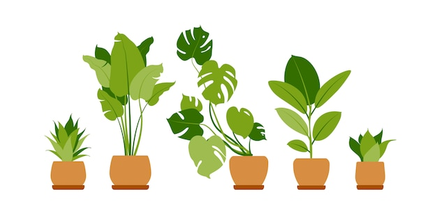 Collection home plants. potted plants isolated on white. set green tropical plants. trendy home decor with indoor plants, planters, cactus, tropical leaves.