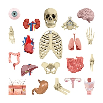 Collection of human organs