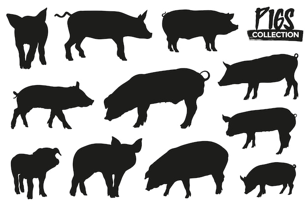 Collection of isolated pig silhouettes. graphic resources.