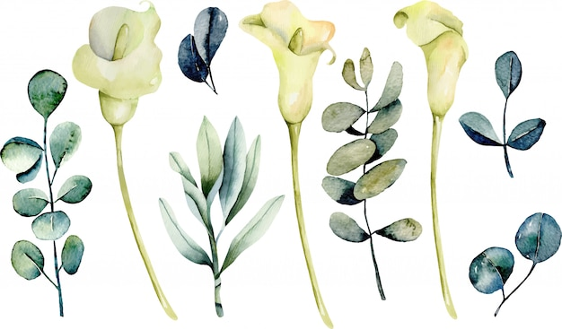 Collection of isolated watercolor callas flowers and eucalyptus