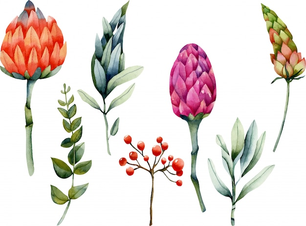 Collection of isolated watercolor protea and plants