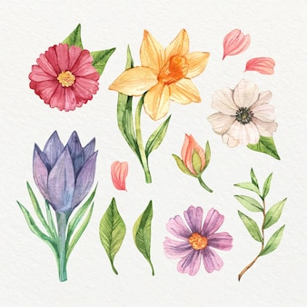 Collection of isolated watercolor spring flowers