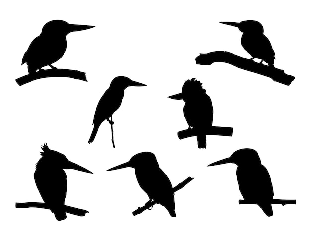 Collection of kingfisher bird on tree branch silhouettes.