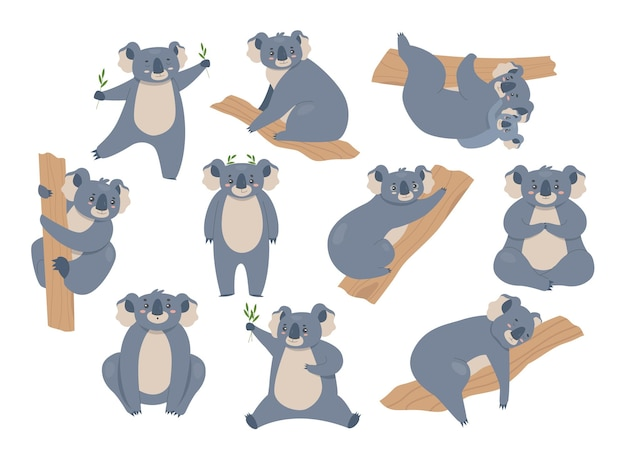 Collection of koala isolated on white