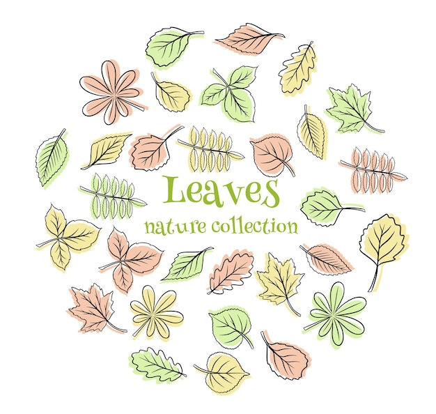 Collection leaves. leaves of different shapes. carved leaves. silhouette