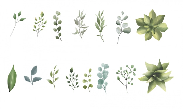 Collection of leaves and watercolor style