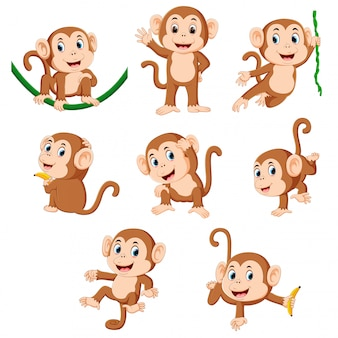 The collection of the monkey playing on the green rope