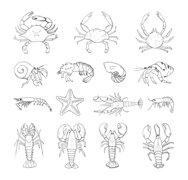 Collection of monochrome illustrations of crustaceans in sketch style