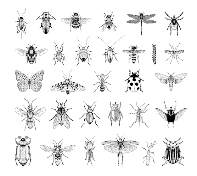 Collection of monochrome illustrations of insects in sketch style