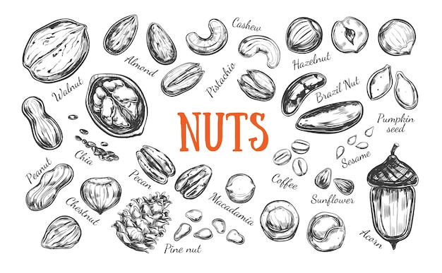 Collection of nuts and seeds isolated on white