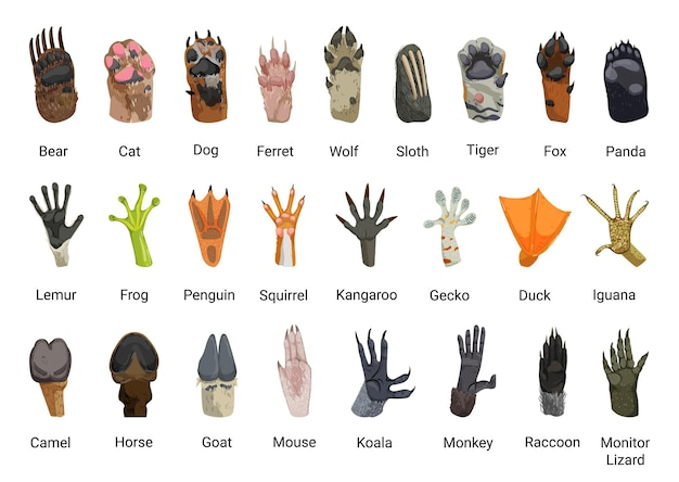 동물의 발 컬렉션
