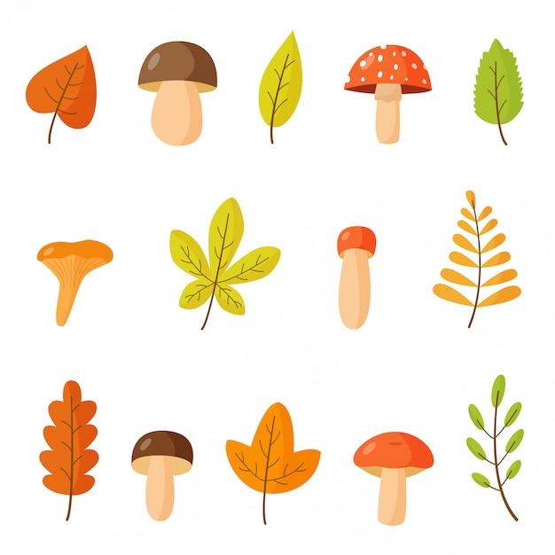 Сбор осенних листьев и лесных грибов.