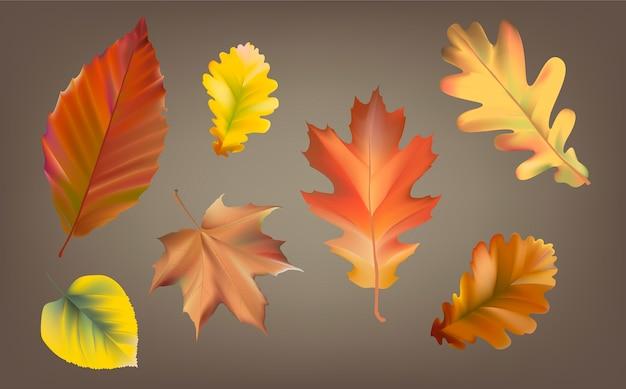Коллекция вектора осенних листьев