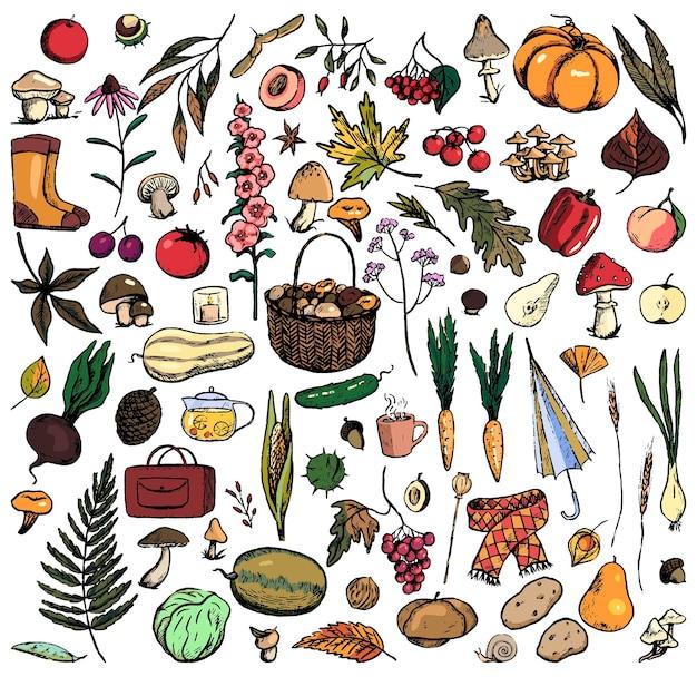 Коллекция рисунков осенней темы. простые цветные рисунки грибов, растений, одежды, листьев, урожая. рука нарисованные векторные иллюстрации. наброски старинные элементы, изолированные на белом для дизайна.