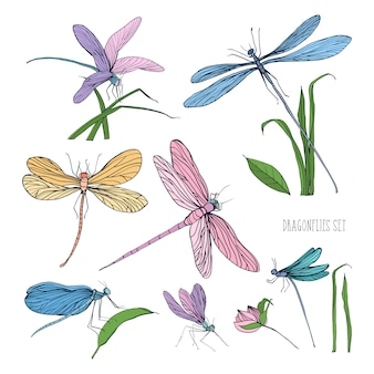 白い背景に分離された美しいカラフルなトンボのコレクション。飛んで、草の葉の上に座っている豪華な翼のある昆虫。エレガントなビンテージスタイルの手描きイラスト