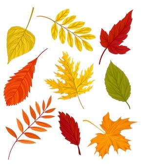 美しい色鮮やかな紅葉のコレクションは白い背景のイラストを残します