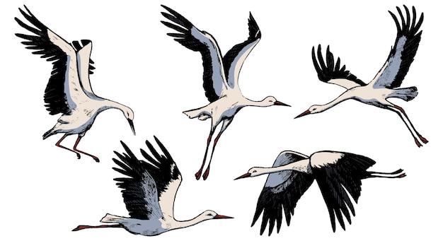 흰색으로 격리된 아름다운 비행 황새의 컬렉션입니다. 야생 조류 크레인의 컬러 스케치입니다. 손으로 그린 벡터 일러스트입니다. 디자인을 위한 빈티지 요소 집합입니다.
