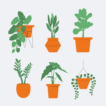 鉢植えの美しい観葉植物のコレクション