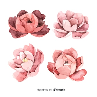 Collection of beautiful peony flowers in watercolor style