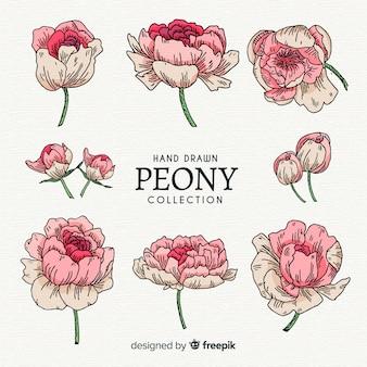 Коллекция красивых цветов пиона