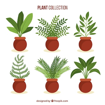 Collection of beautiful plants