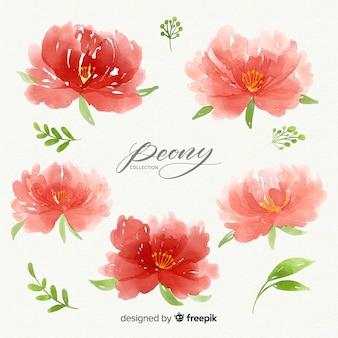 아름 다운 수채화 모란 꽃의 수집