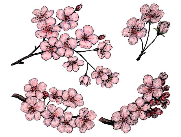 Коллекция цветущих веток сакуры. набор цветов вишни. рисованной векторные иллюстрации. ботанические зарисовки, изолированные на белом. цветные элементы для дизайна.