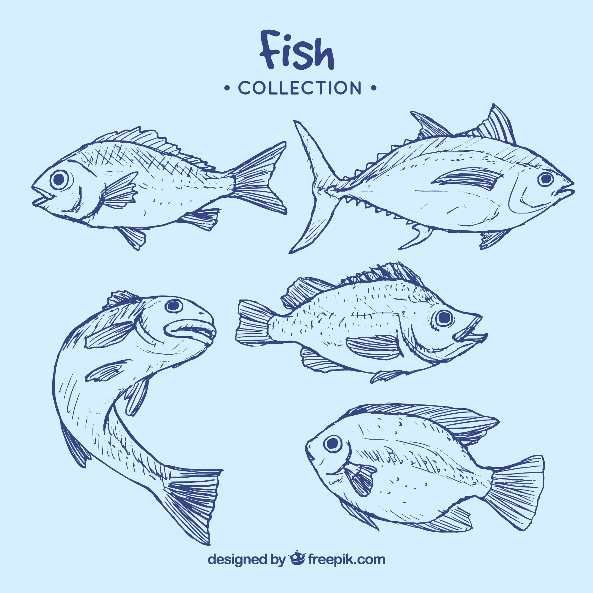 Collection of blue fish