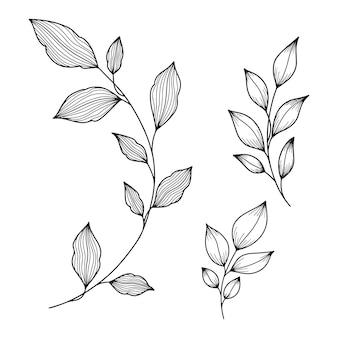 白で隔離される植物の葉のコレクション