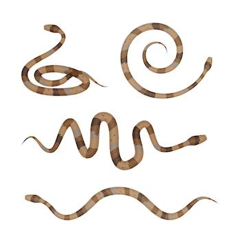 Коллекция коричневых ядовитых змей или изолированных питонов