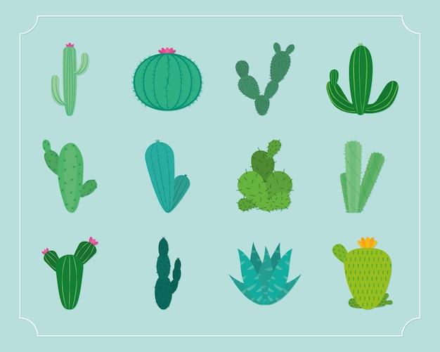 선인장 식물의 수집