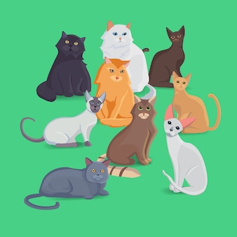 다른 품종의 고양이 컬렉션. 고양이를 설정하십시오. 그림을 설정합니다.
