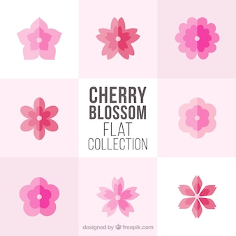 Collection of cherry blossoms in flat design
