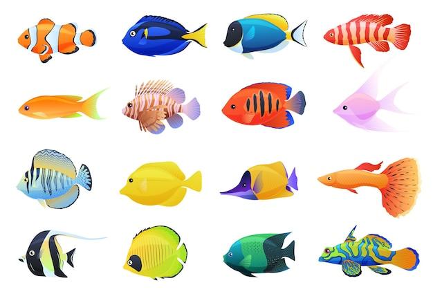 着色された水族館の熱帯魚のコレクション
