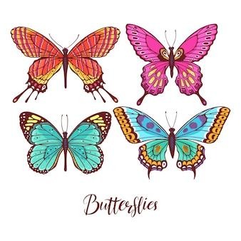 화려한 나비 모음