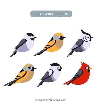 Collection of cute birds in flat design