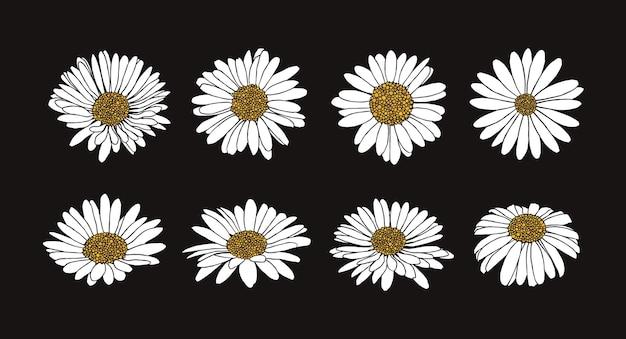 잉크 스타일으로 데이지 꽃의 수집