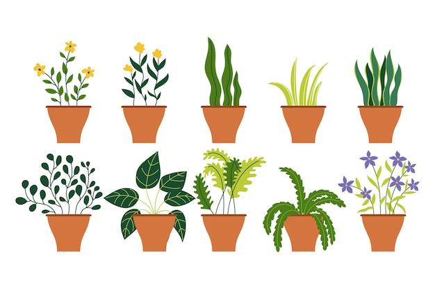 다른 장식 집 실내 정원 화분의 컬렉션