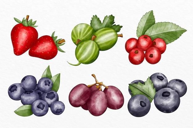 図解されたさまざまな果物のコレクション