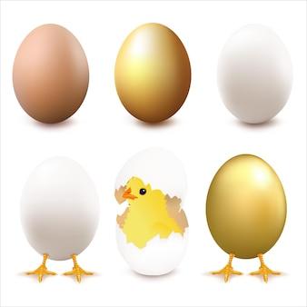 卵のコレクション、白い背景、イラストで隔離。