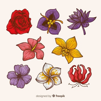 Collection of eight tropical flowers